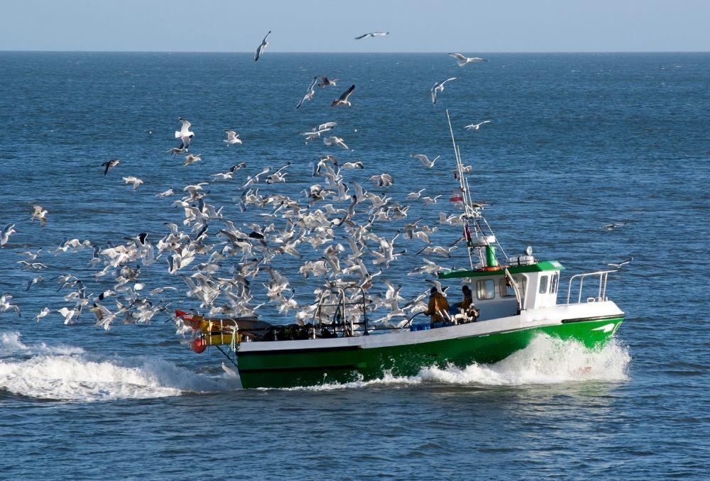 Balıkçı Tekneleri Sigortası